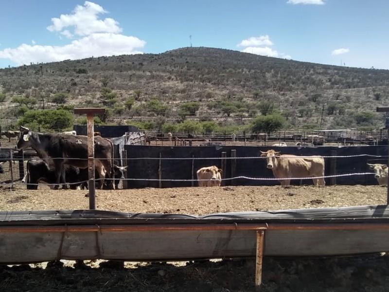 Zacatecas, entre los siete estados con mayor exportación a EEUU