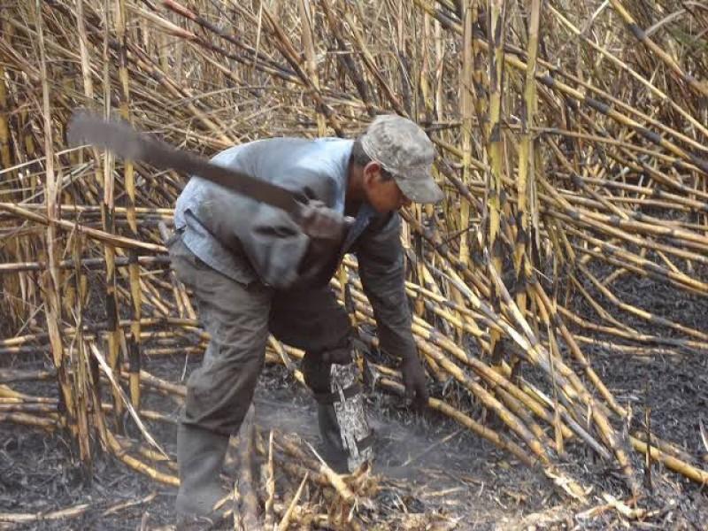 Zafra en Nayarit dejará derrama de 2 mil mdp