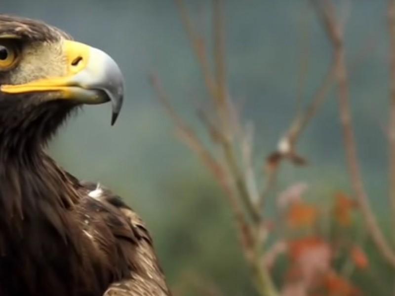 Zona suroccidente de Zacatecas podría ser declarada Área Natural Protegida