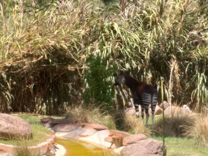 Zoo León, único en Latinoamérica para preservación de especies