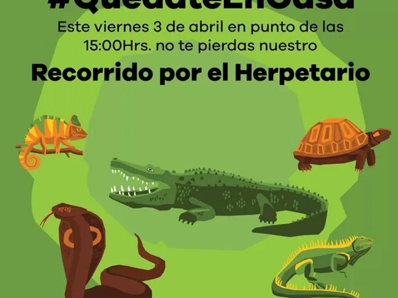 Zoológico de Morelia realizará recorrido por Herpetario vía  Facebook