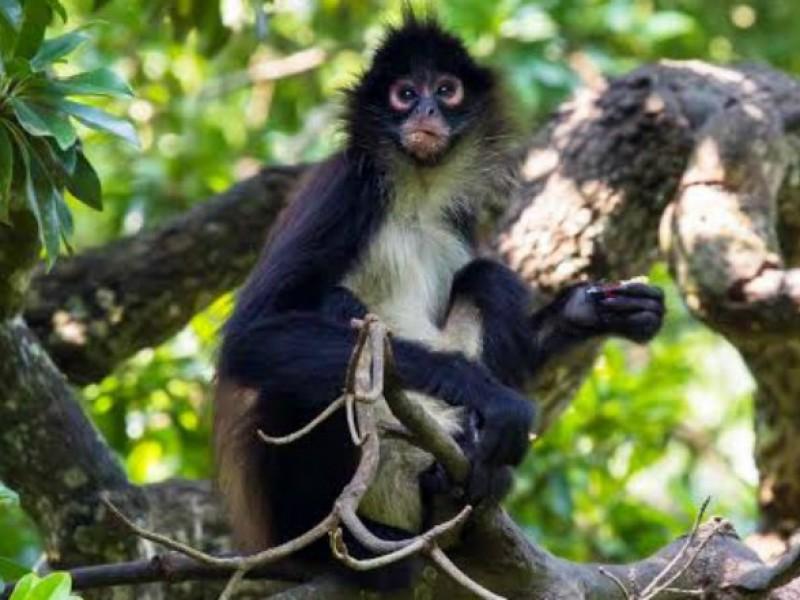 Zoomat busca conservación y reproducción de especies